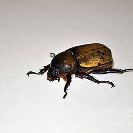 Al Powell Photography USA - Big Beautiful Beetle