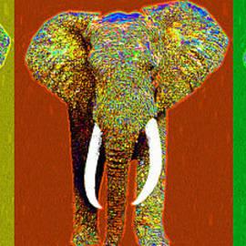 Wingsdomain Art and Photography - Big Elephant Three 20130201v1