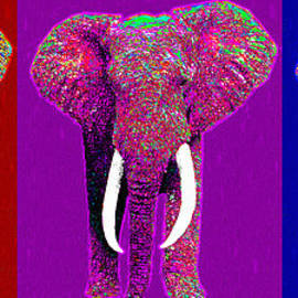Wingsdomain Art and Photography - Big Elephant Three 20130201v2