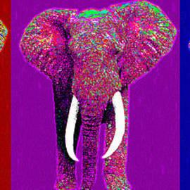 Wingsdomain Art and Photography - Big Elephant Three 20130201v2