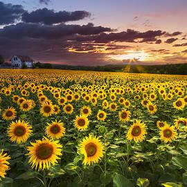 Debra and Dave Vanderlaan - Big Field of Sunflowers