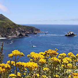 Diana Sainz - Big Sur Loves Yellow by Diana Sainz