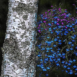 Marty Saccone - Birch and Blossoms