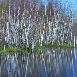 Lori Frisch - Birch Tree Reflections