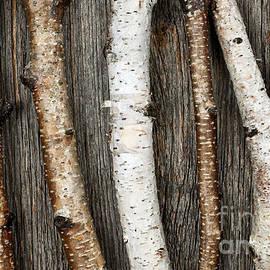 Elena Elisseeva - Birch trunks