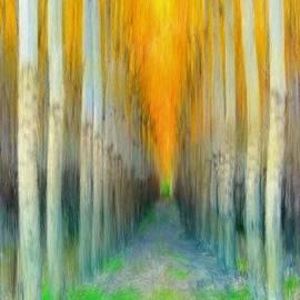 Bruce Nutting - Birches
