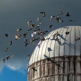 Mike Savad - Bird - BIRDS