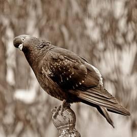 Eleni  Makraki - Bird