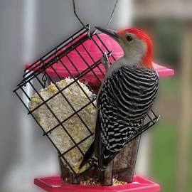Thomas Woolworth - Bird Feeder WP 06