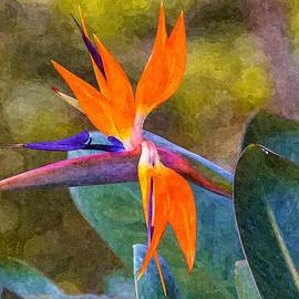 Craig Lapsley - Bird of Paradise Flower