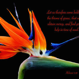 Debbie Nobile - Bird of Paradise Flower with verse
