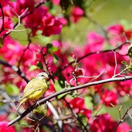 Joji Ishikawa - Bird of Paradise