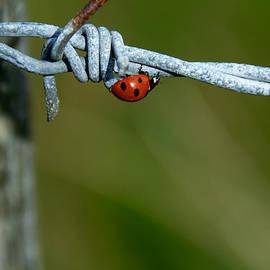 Lisa Fortin Jackson - Bird On A Wire