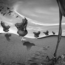 Teodora Vlaicu - Birds eye view