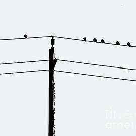 Nina Silver - Birds on a Wire