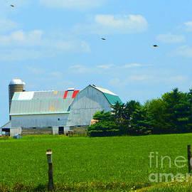 Tina M Wenger - Birds Over Barn
