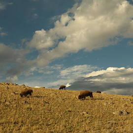 Jeff  Swan - Bison and clouds