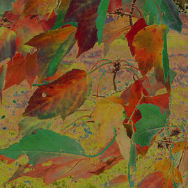Minding My  Visions by Adri and Ray - Bizarre Leaves