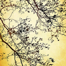 Christina Rollo - Black And Gold Tree