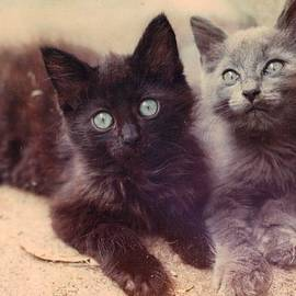 Trudy Brodkin Storace - Black and Gray Kitten Brothers