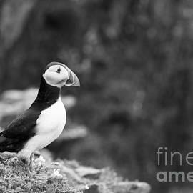 Anne Gilbert - Black and White Black and White Bird