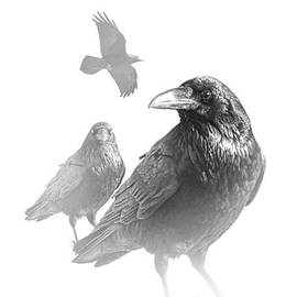 Randall Nyhof - Black and White Image of Ravens on White Background
