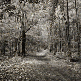 Leif Sohlman - Black and white IMP Grongarn forest south of city Enkoping Sweden