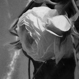 Leif Sohlman - black and white monochrome Artistic painterly pink rose in half profile