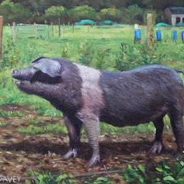 Martin Davey - Black And White Pig on Farm