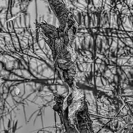 Leif Sohlman - black and white sculpture by B BW- Tree in water sculptured by beavers