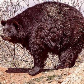 Janice Rae Pariza - Black Bear Awakening