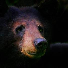 Michael Eingle - Black Bear
