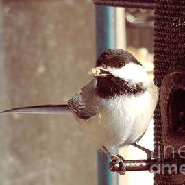 Victoria  Dauphinee - Black Capped Chickadee with a Seed