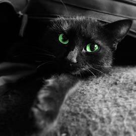 Oldschool Crew - Black Cat