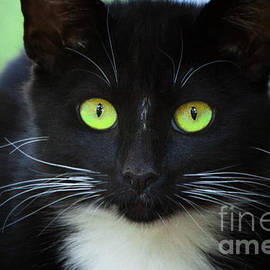 Jerry Cowart - Black Cat With Beautiful Green Eyes