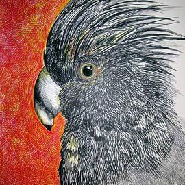 Roberto Gagliardi - Black Cockatoo