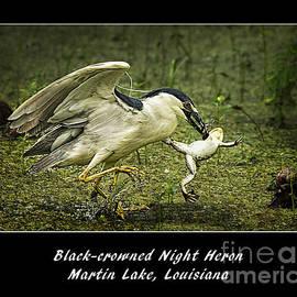 Priscilla Burgers - Black-crowned Night Heron at Martin Lake