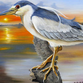 Phyllis Beiser - Black Crowned Night Heron At The Jordan