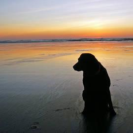 Pamela Patch - Black Dog Sundown
