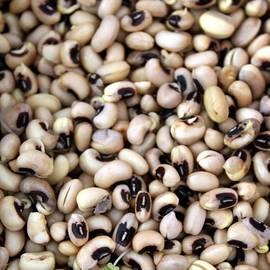 Henrik Lehnerer - Black Eyed Beans Sprouts