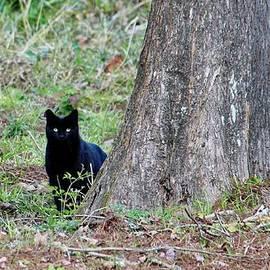 Cynthia Guinn - Black Kitty