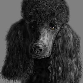 Myke  Irving - Black Poodle