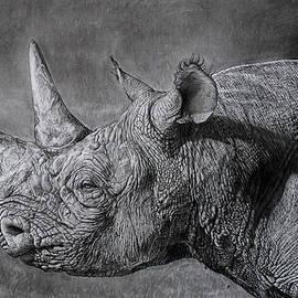 Ian Cuming - Black Rhino at sunset.