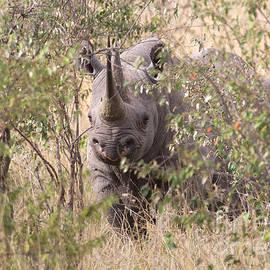 Chris Scroggins - Black Rhino