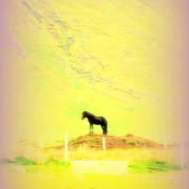 Hilde Widerberg - Black Stallion