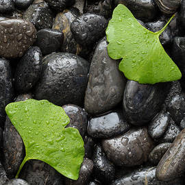 Steve Gadomski - Black Stones And Ginko Leaves Square