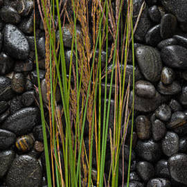 Steve Gadomski - Black Stones And Grasses