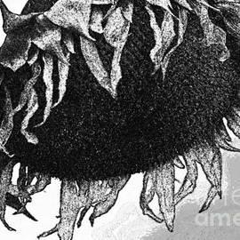 Juls Adams - Black Sunflower