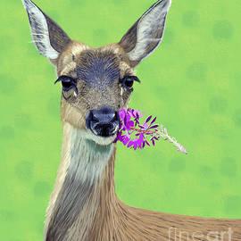 Jacqueline Barden - Black-Tailed Deer