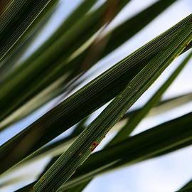 Neal  Eslinger - Blades of Grass